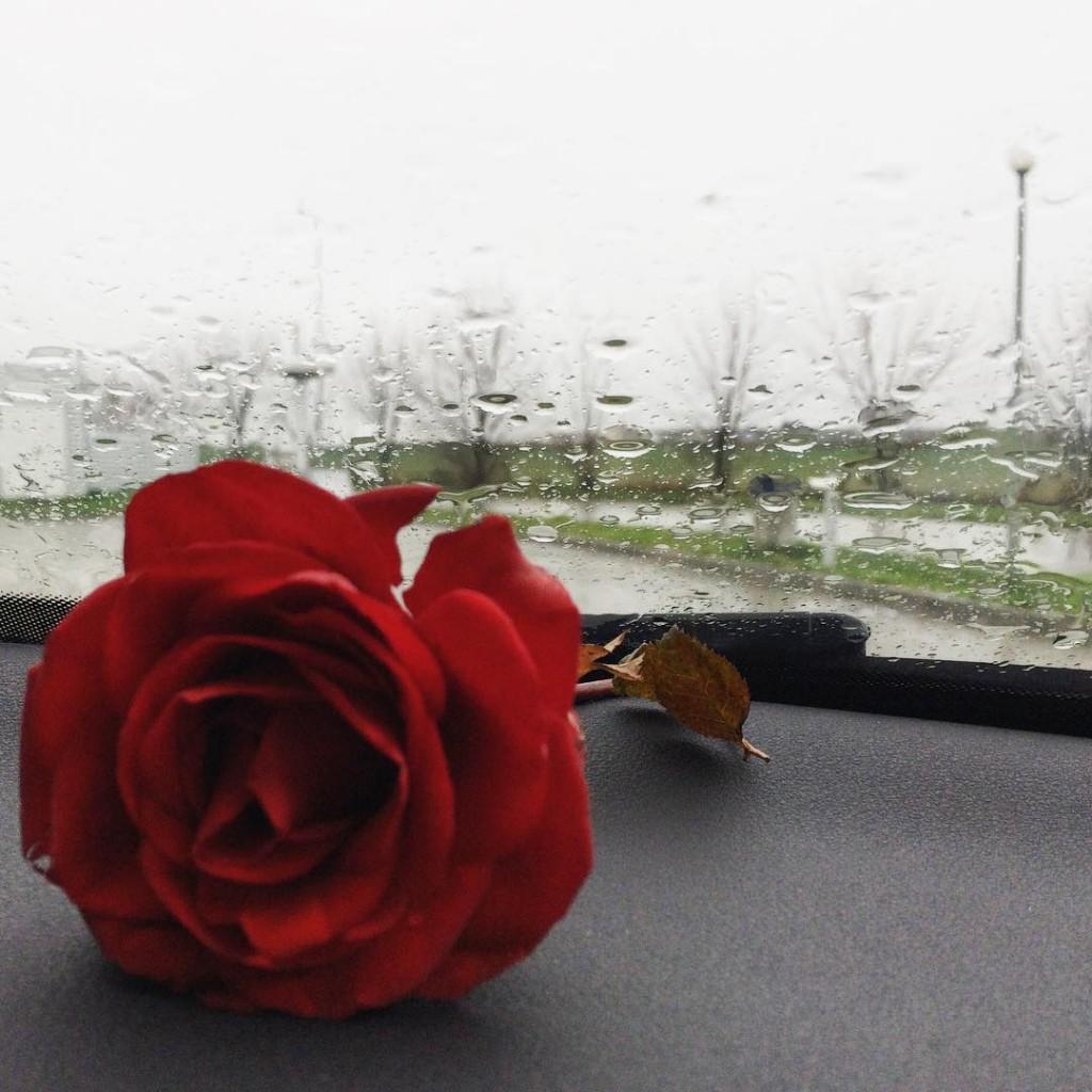 Rainy weekend MYAonRoadletsbegorgeousletsbegorgeoustravela2influencerinstadailyinstaaddictinstastylefashionistagorgeousstylebbloggersbbloggersrorainydayrainydaysaudiaudia3roseredroserainyweatherraindropsigconstantainstagramersweekendonroadtravelingsibiu